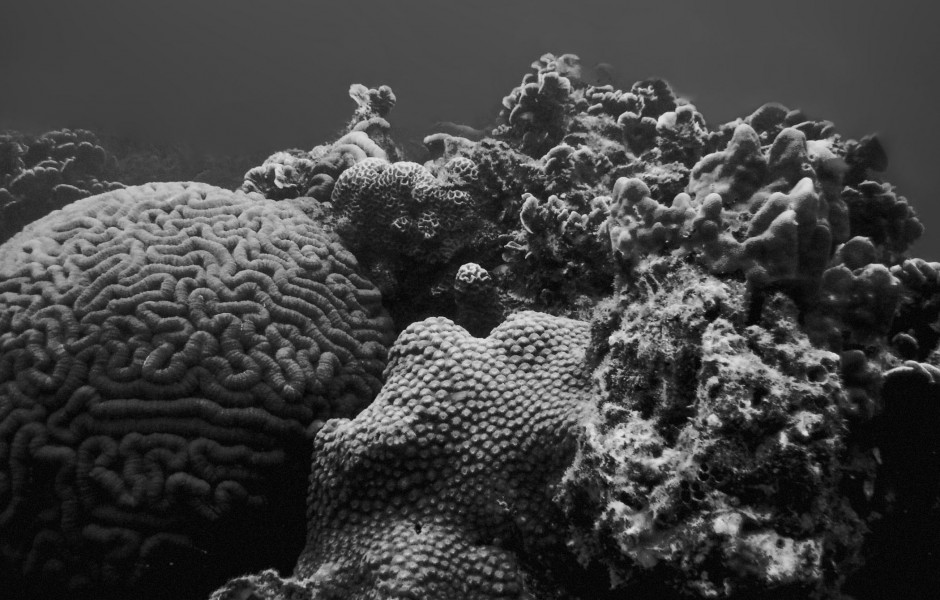 Koh Tao Diving Coral Reef
