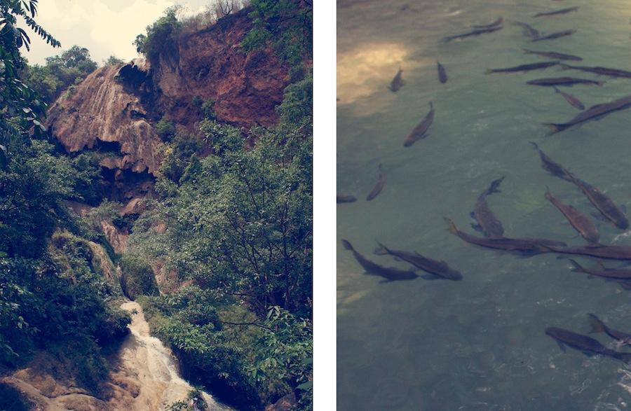 Fish Erawan National Park