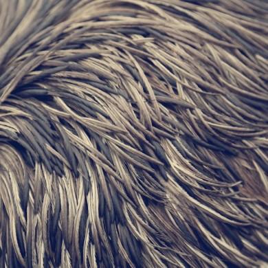 Emu Feathers Australia